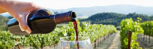 Wine testing limo service